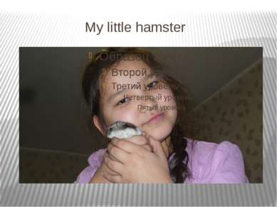 My little hamster