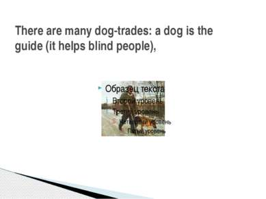 There are many dog-trades: a dog is the guide (it helps blind people),