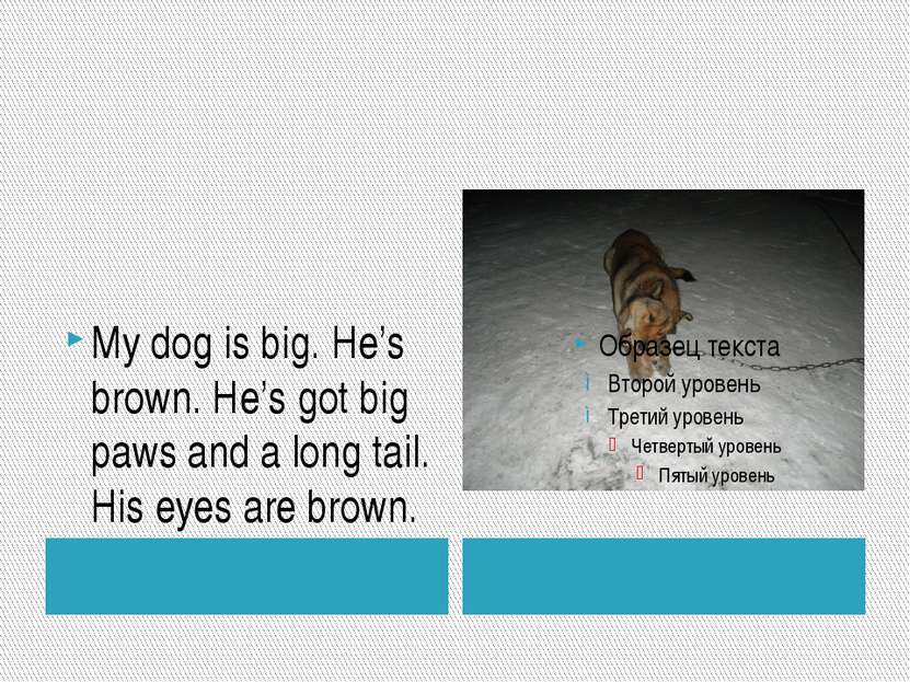 My dog is big. He's brown. He's got big paws and a long tail. His eyes are br...