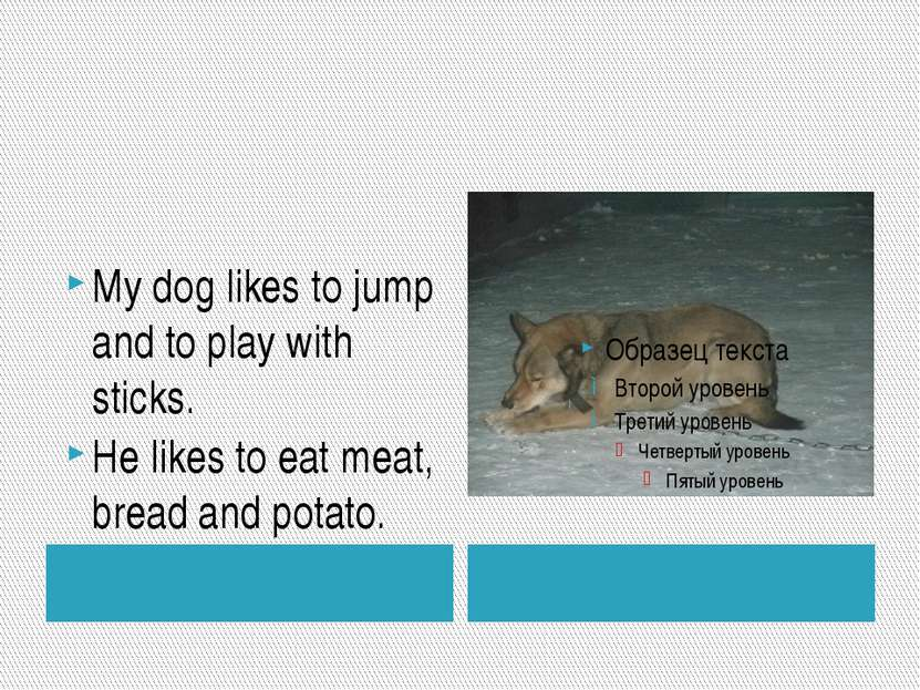 My dog likes to jump and to play with sticks. He likes to eat meat, bread and...
