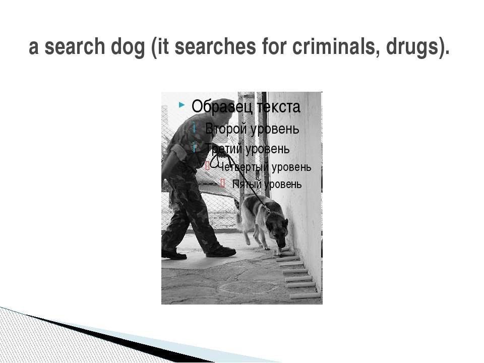 a search dog (it searches for criminals, drugs).