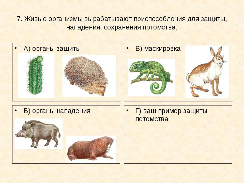 7. Живые организмы вырабатывают приспособления для защиты, нападения, сохране...