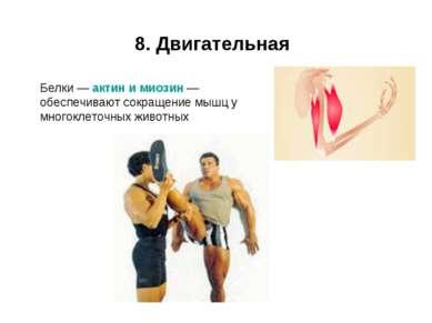 8. Двигательная Белки — актин и миозин — обеспечивают сокращение мышц у много...