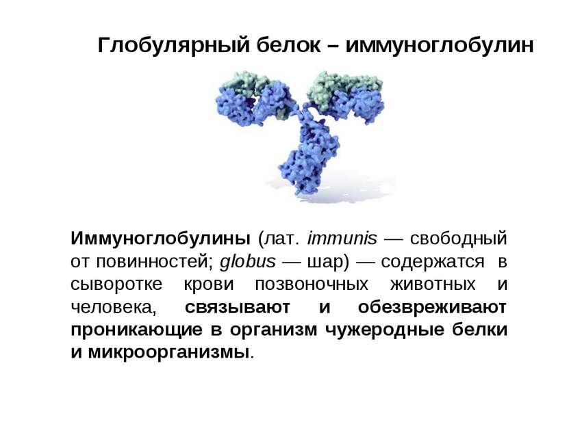 Глобулярный белок – иммуноглобулин Иммуноглобулины (лат. immunis — свободный ...