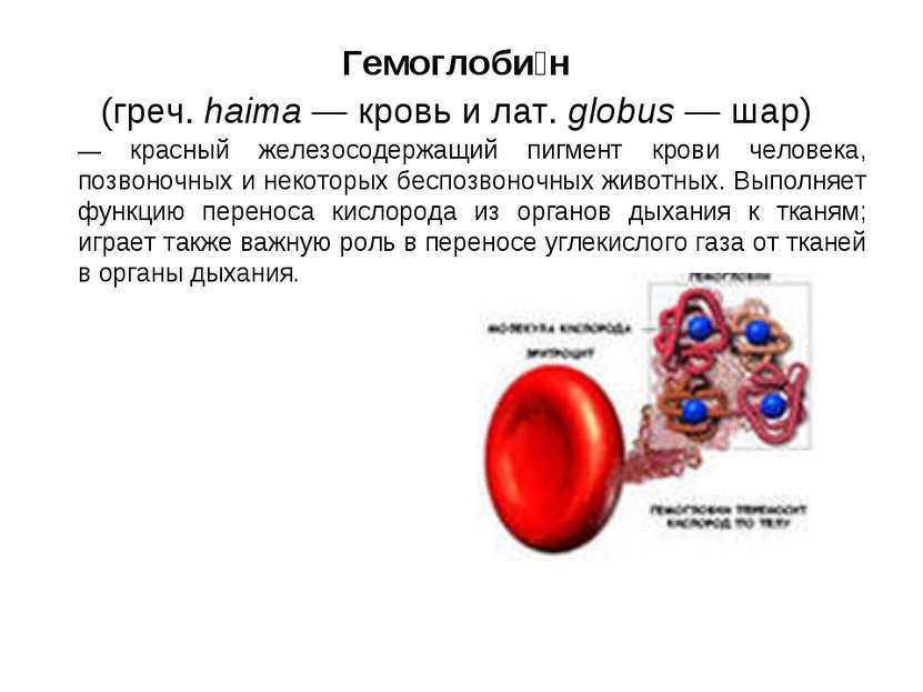 Гемоглоби н (греч. haima — кровь и лат. globus — шар) — красный железосодержа...