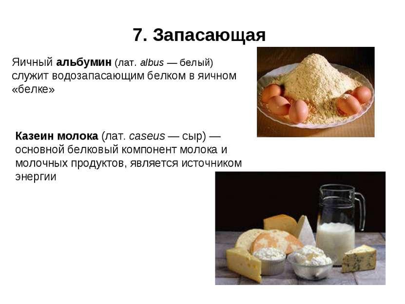 7. Запасающая Яичный альбумин (лат. albus — белый) служит водозапасающим белк...