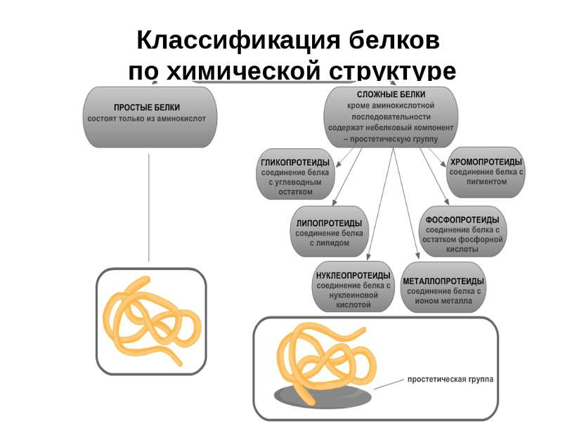 Классификация белков по химической структуре
