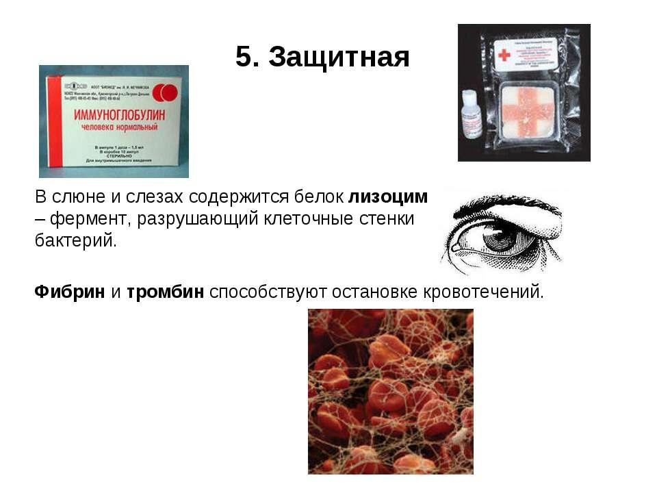 5. Защитная В слюне и слезах содержится белок лизоцим – фермент, разрушающий ...