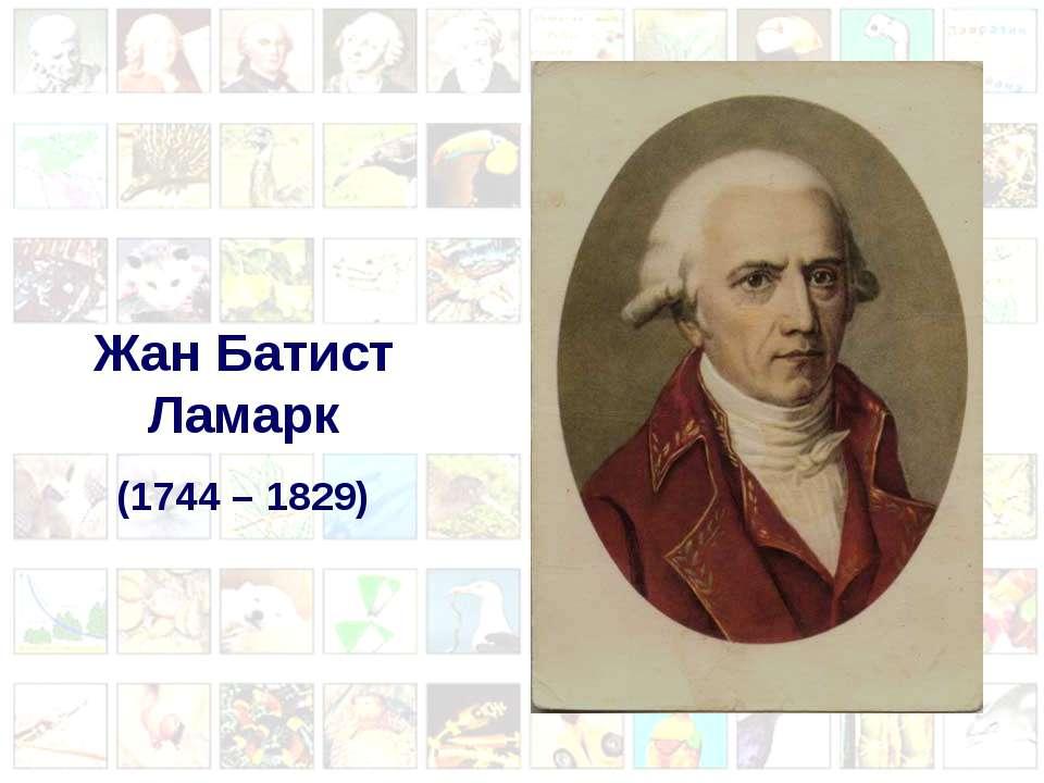 Жан Батист Ламарк (1744 – 1829)
