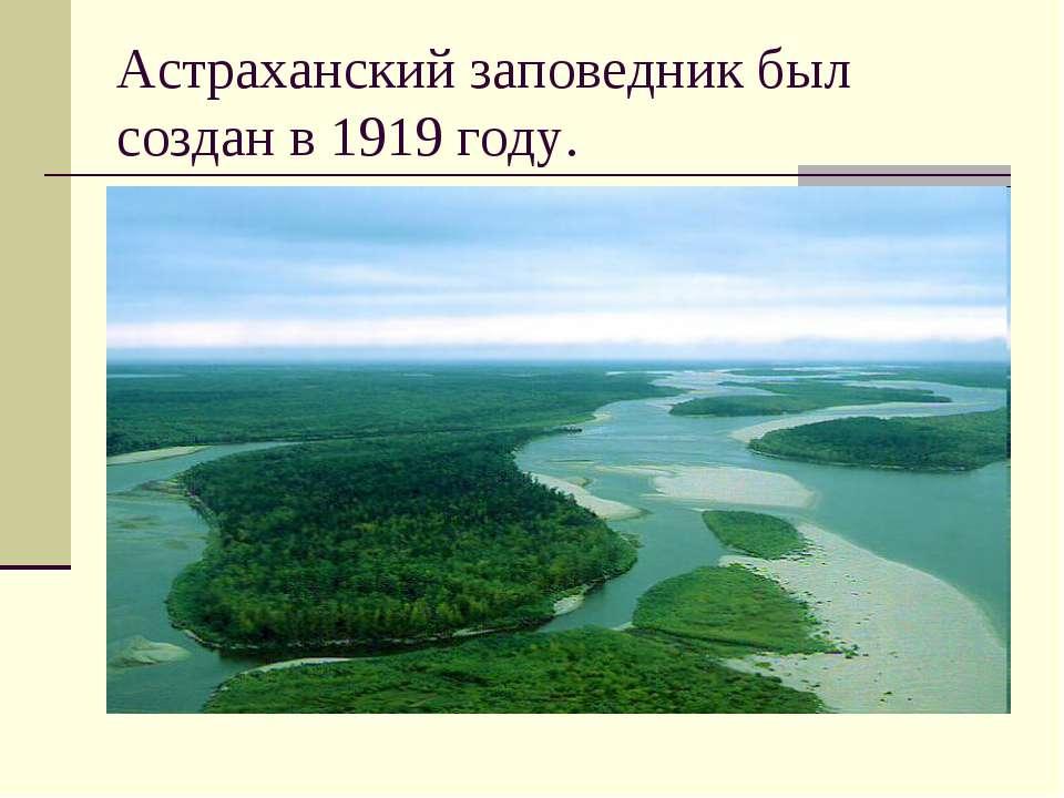 Астраханский заповедник был создан в 1919 году.