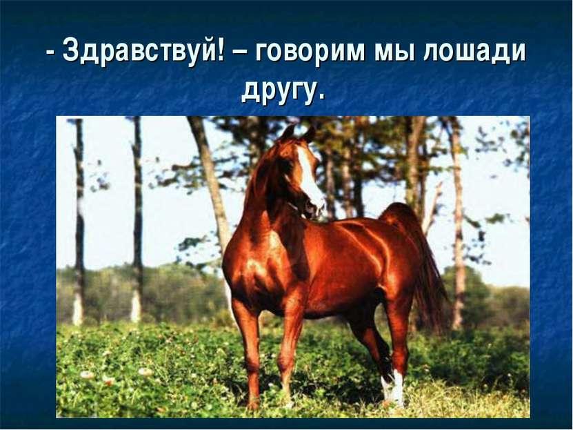 - Здравствуй! – говорим мы лошади другу.