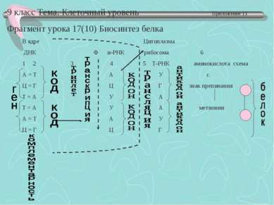 9 класс Тема. Клеточный уровень Приложение 11 Фрагмент урока 17(10) Биосинтез...