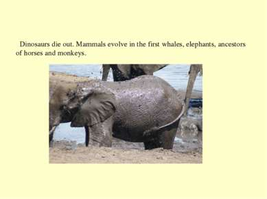 Dinosaurs die out. Mammals evolve in the first whales, elephants, ancestors o...