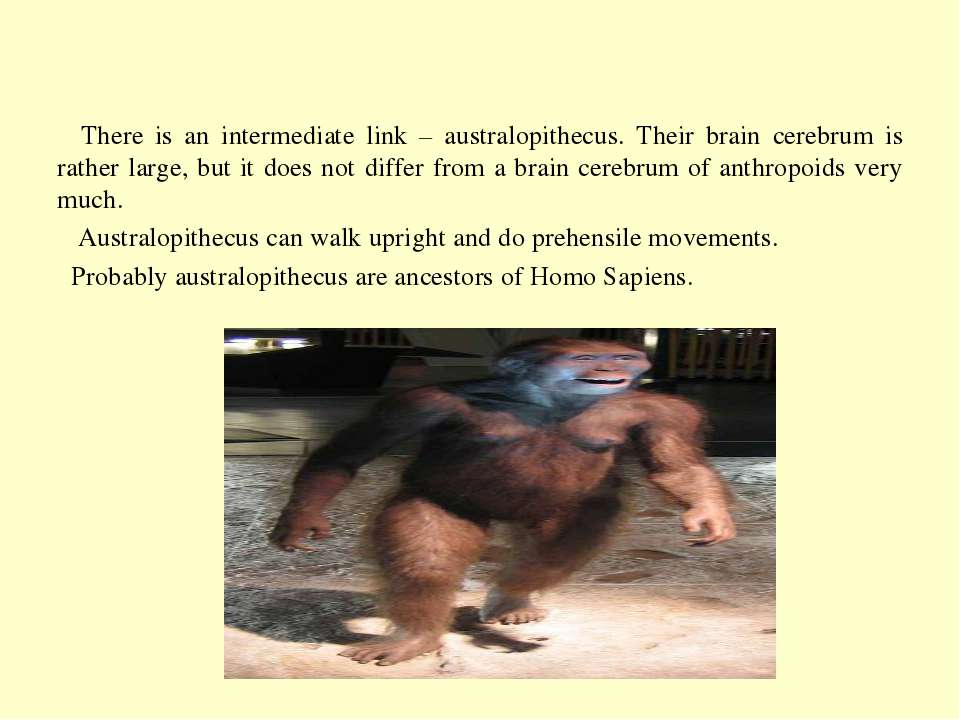 There is an intermediate link – australopithecus. Their brain cerebrum is rat...
