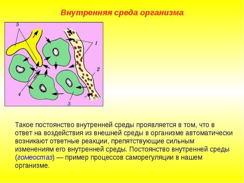 Внутренняя среда организма Такое постоянство внутренней среды проявляется в т...