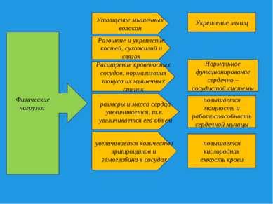 Физические нагрузки Утолщение мышечных волокон Развитие и укрепление костей, ...