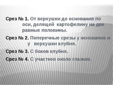Срез № 1. От верхушки до основания по оси, делящей картофелину на две равные ...