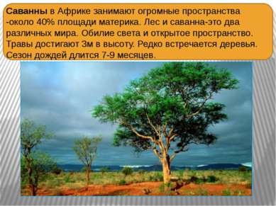 Саванны в Африке занимают огромные пространства -около 40% площади материка. ...
