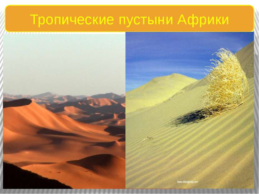 Тропические пустыни Африки