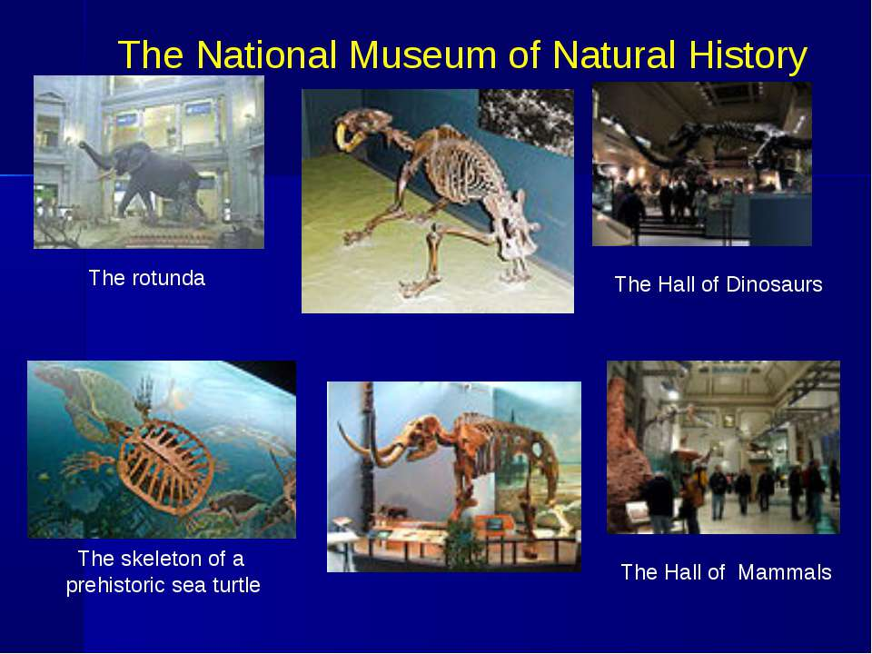 The National Museum of Natural History The rotunda The Hall of Dinosaurs The ...