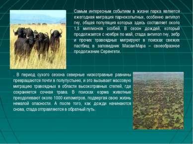 Самым интересным событием в жизни парка является ежегодная миграция парнокопы...