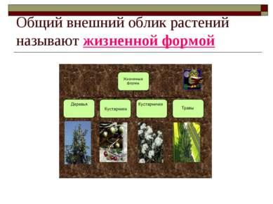 Общий внешний облик растений называют жизненной формой