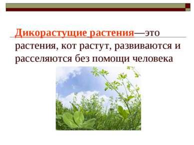 Дикорастущие растения—это растения, кот растут, развиваются и расселяются без...