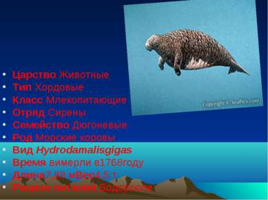 Царство Животные Тип Хордовые Класс Млекопитающие Отряд Сирены Семейство Дюго...