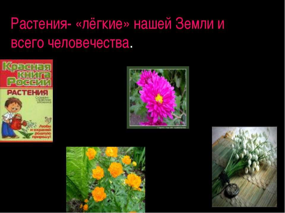 Растения- «лёгкие» нашей Земли и всего человечества.