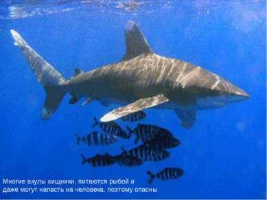 Многие акулы хищники, питаются рыбой и даже могут напасть на человека, поэтом...