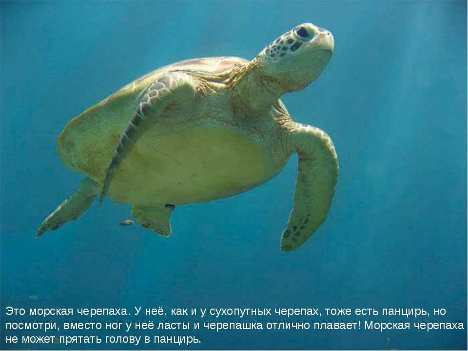 Это морская черепаха. У неё, как и у сухопутных черепах, тоже есть панцирь, н...