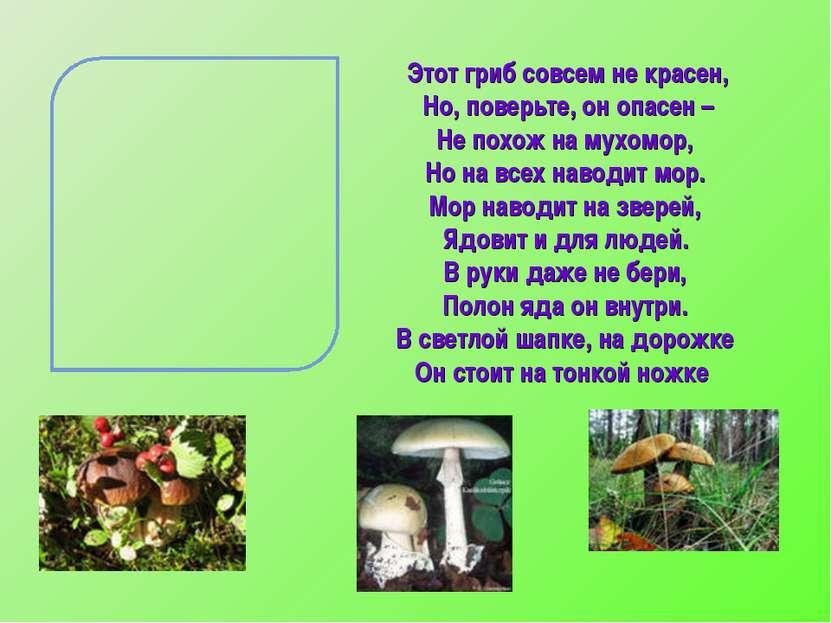 Этот гриб совсем не красен, Но, поверьте, он опасен – Не похож на мухомор, Но...
