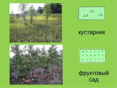 кустарник фруктовый сад