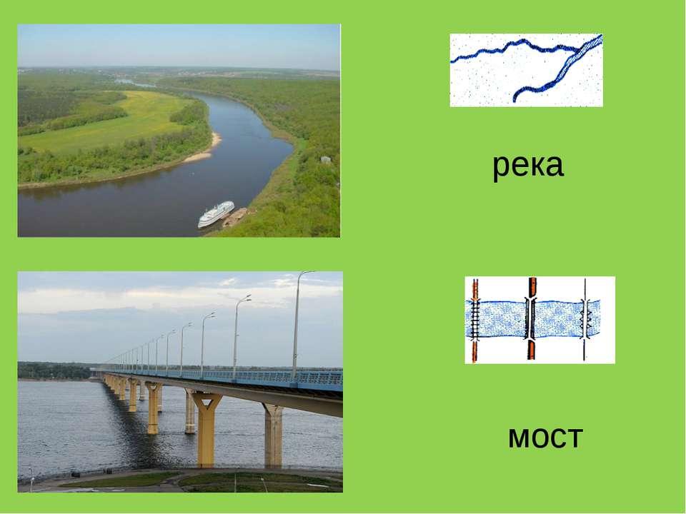 река мост