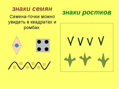 знаки семян Семена-точки можно увидеть в квадратах и ромбах знаки ростков