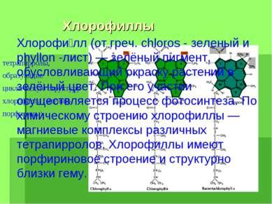 Хлорофиллы тетрапирролы, образующие циклическую структуру хлорофилла (магний-...