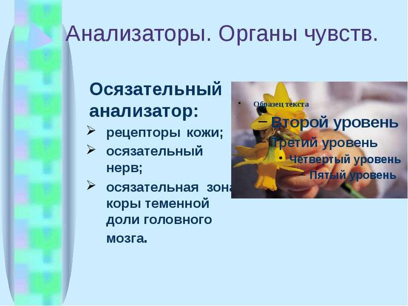 Анализаторы. Органы чувств. Осязательный анализатор: рецепторы кожи; осязател...