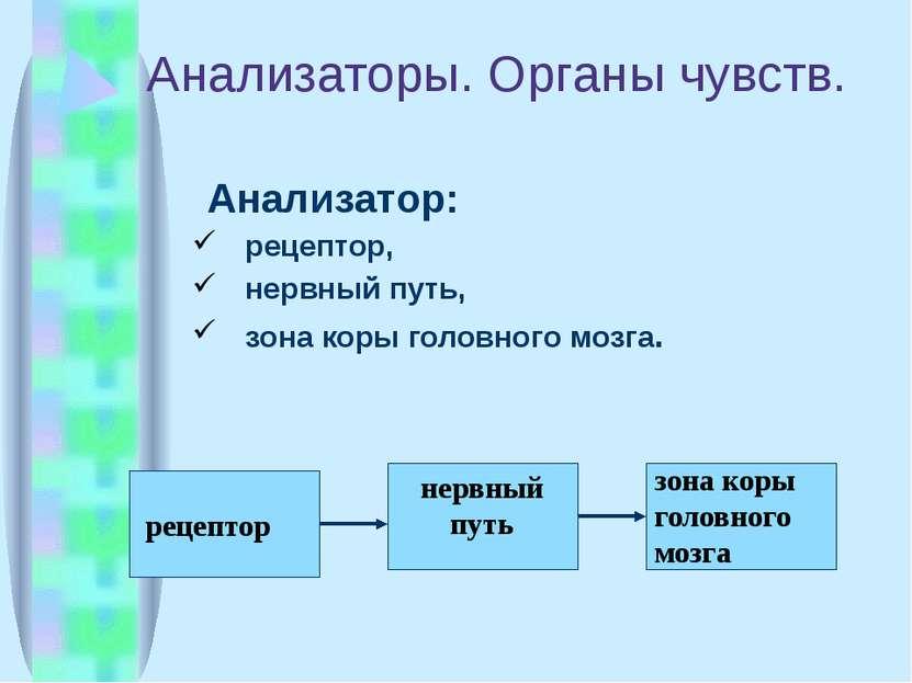 Анализаторы. Органы чувств. Анализатор: рецептор, нервный путь, зона коры гол...