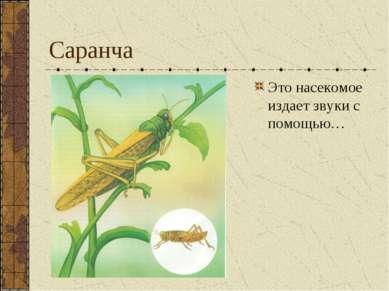 Саранча Это насекомое издает звуки с помощью…