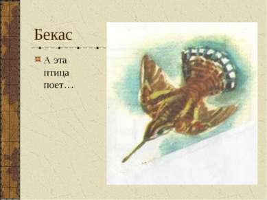 Бекас А эта птица поет…