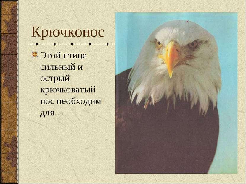 Крючконос Этой птице сильный и острый крючковатый нос необходим для…