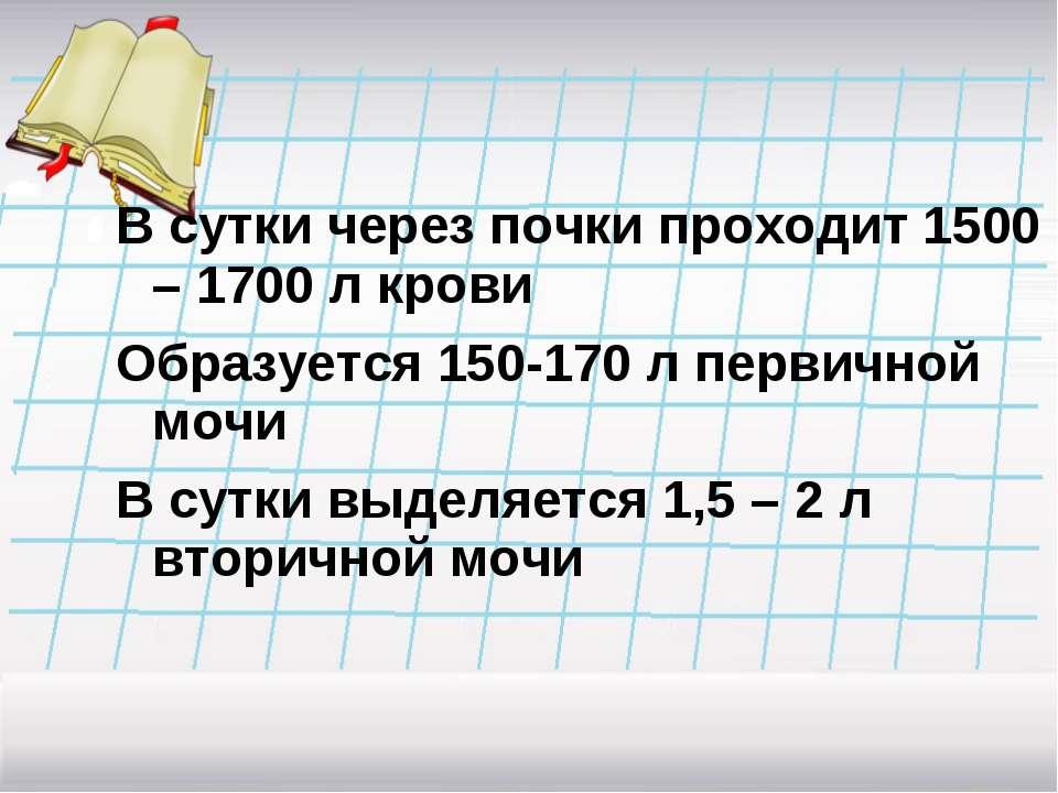 В сутки через почки проходит 1500 – 1700 л крови Образуется 150-170 л первичн...