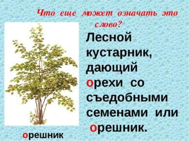 Что еще может означать это слово? орешник Лесной кустарник, дающий орехи со с...
