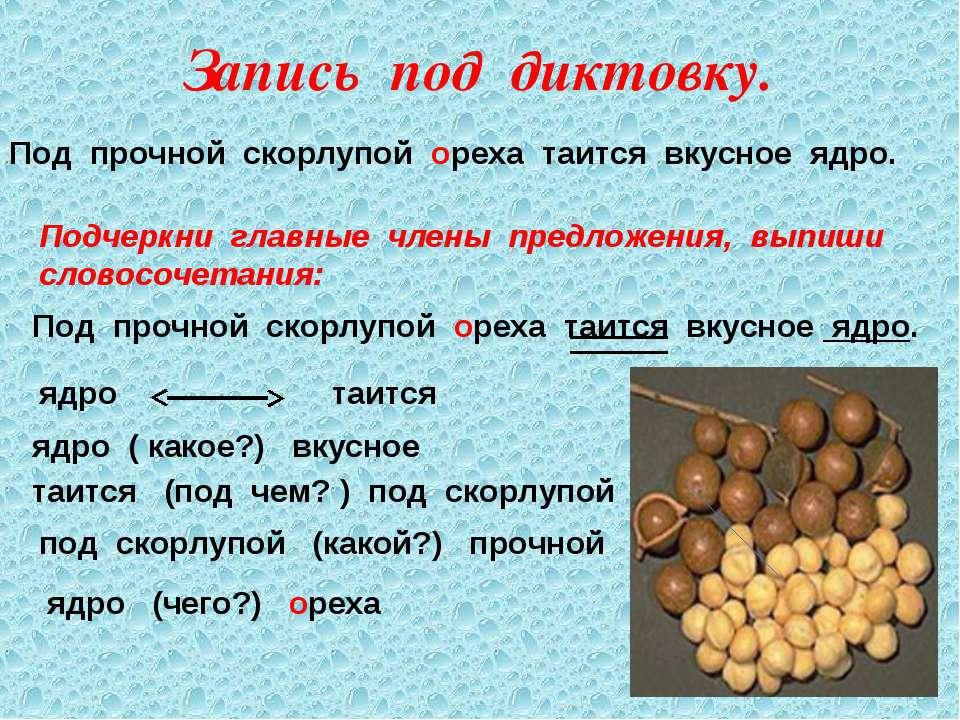 Запись под диктовку. Под прочной скорлупой ореха таится вкусное ядро. Подчерк...