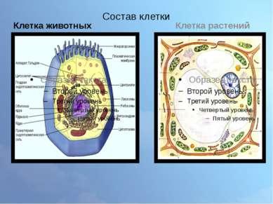 Состав клетки Клетка животных Клетка растений
