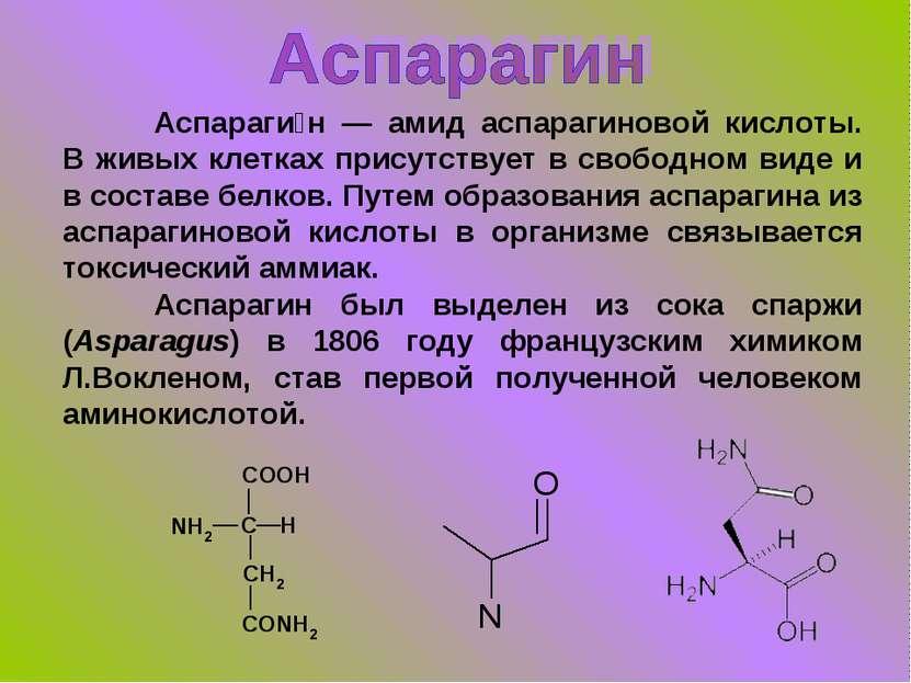 Аспараги н — амид аспарагиновой кислоты. В живых клетках присутствует в свобо...