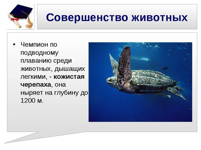 Совершенство животных Чемпион по подводному плаванию среди животных, дышащих ...