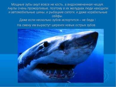 Мощные зубы акул вовсе не кость, а видоизмененная чешуя. Акулы очень прожорли...