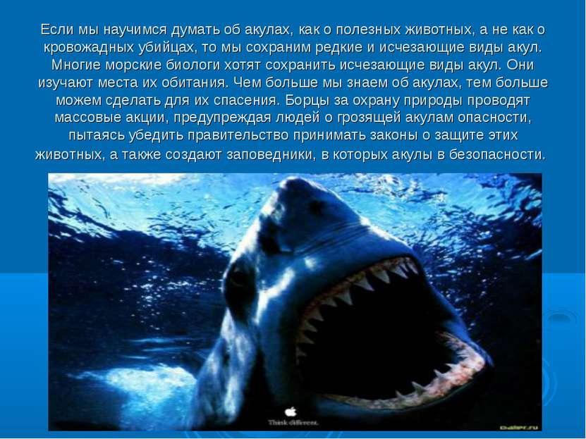 Если мы научимся думать об акулах, как о полезных животных, а не как о кровож...