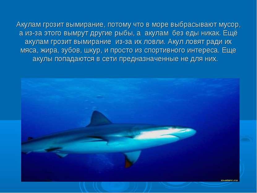 Акулам грозит вымирание, потому что в море выбрасывают мусор, а из-за этого в...